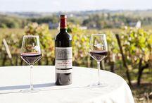 Nos vins / Our wine