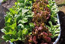 grønnsakskasser