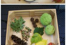 Nature Sensory Trays