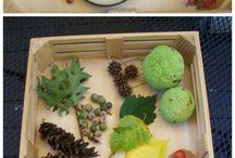 montessori príroda