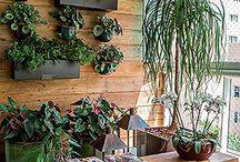 jardin / aranjamente plante