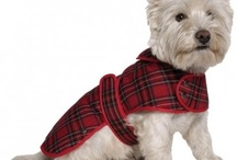 Dog Coats / Warm your dog up this winter with this selection of dog coats.