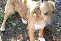 CrowdPets Hormiga / Eventi & Donazioni Pro Animali