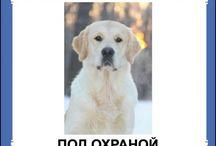 Таблички с собаками