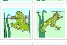 rozwój żaby