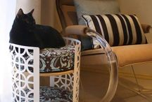 Cat furniture & accessories
