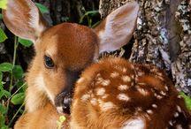 Lovely Things : Deer