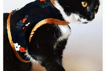Harness for cats and small dogs