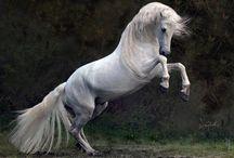 Gyönyörű lovak