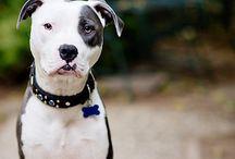 HondenFotografie Tips