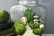 Terrariums mini gardens, succulents