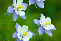 type flowers