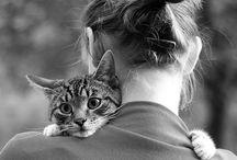 PHOTO - Cats