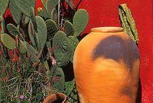 Amor por los cactus