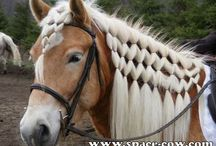 Horse Hairstyle