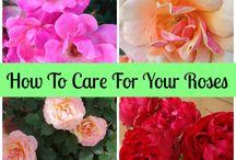 Gardening advices