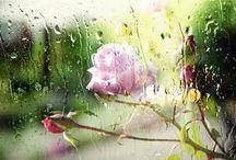 In the rain!!