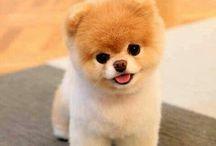 tatlı köpekler