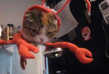 Funny Kitties / by Brianna Allen