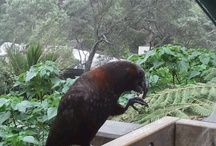At the zoo:-):-)