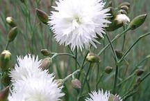 bloemen / bloemen / by riet van tiggelen