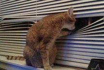 Kattenhumor