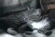 Cat Gifs! / Watching Cats Online Is Actually Good For You, So Here Are 21 Hilarious Clips