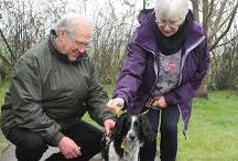 Bridgend | Wales / At Dogs Trust Bridgend, we have 40 kennels, and can care for around 80 dogs at any time. We have 2 large enclosed fields, where the dogs can burn some energy and play with some friends during an off-lead run, a training barn, 2 exercise areas filled with fun areas to explore, and on site vet suite.