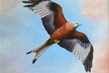 Birds / Bird Artwork by ADO Artists