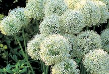 garden plant wishlist