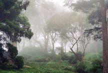 лес джунгли