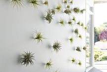 .airplants.