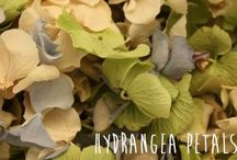 Hydrangea Petals for weddings / Buy our beautiful hydrangea petals available in 6 colours, www.confetti-cones.co.uk