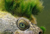 reptiles and amphibians / by vickie williamson