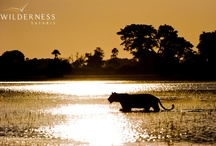 Botswana / by Down Under Endeavours