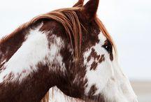 Horses.'