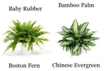 Indoor plants to clean air