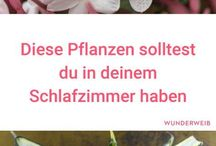 Pflanze zimmer