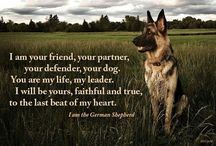 For the Love of German Shepherds