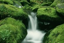 Stream's, Stones, Moss, Grass.
