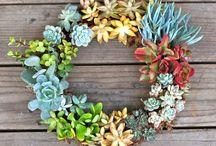 Chic Succulent gardens