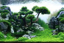 Aquarium / Tiny little fishy fishies, plants, tanks and underwater worlds