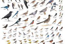 For the birds! / by Stephanie Rayniak