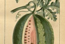 dessins  fruits et légumes