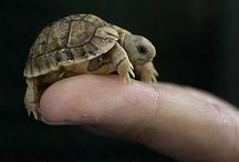 chelonia / turtles, tortoises and all sorts adorable shelled reptiles / by Megan Klein
