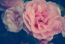 na górze róże