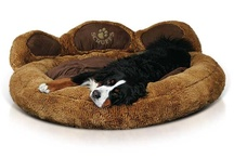 Pet Accessories / As well as stocking accessories for Horse and Riders, we also sell equipment for other pets. Our collection includes equipment for dogs and kennels.