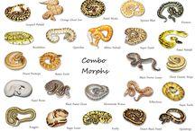Pythons!!!