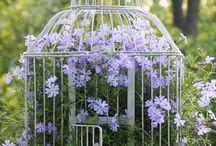 Vetrina giardino