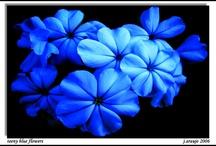 Tudo azul... todo mundo nu ...